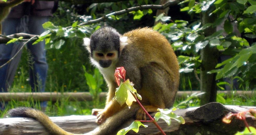 Monkey Valley near Vanzay France
