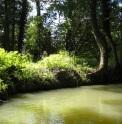 Marais Poitevin sunlit river