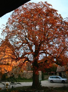 Autumn Chestnut Tree
