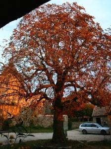 Autumn Chestnut Tree
