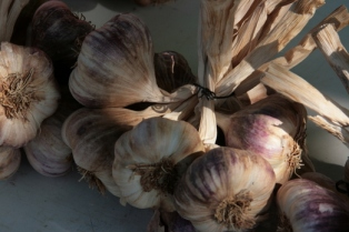 Classic French garlic!